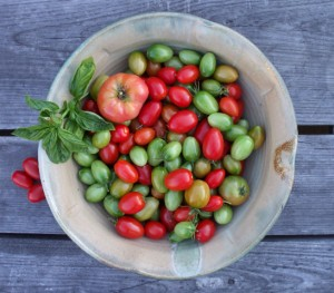 Bowl of different colored tomatoes